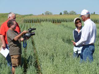 Dr Sands oat field 3